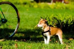 Hund mit Fahrrad