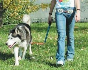 Hund geht an Laufleine