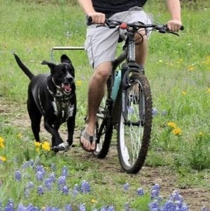 Hund läuft mit Fahrrad